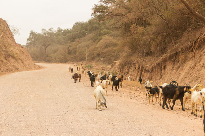 We ran into goats along the way