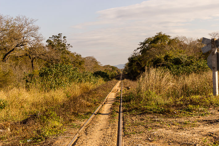 A railroad surrounded by vegetation