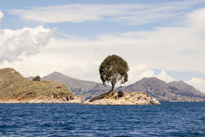 Lonely tree on our boat ride to Isla del Sol